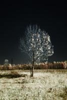 Artificial Winter by phograph
