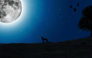 Barking at the Moon by NatKaneria