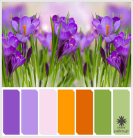 Crocus Colorpallet by colorpallets