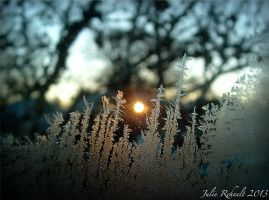 Sunrise Through a Forest of Frost by jewels4665