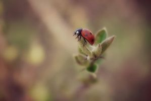ladybug by a-beautiful-soul