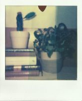 Plants and Books by slumbrous