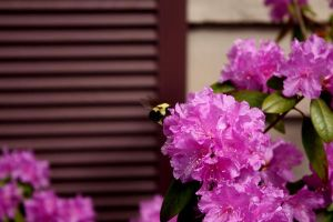 bumble bee by ClaireErdal