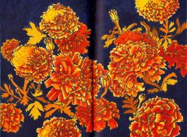 Marigolds by starshield