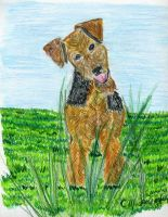 Airedale Puppy by the-sashimi-frog