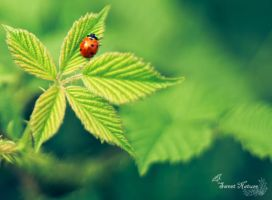 My Little ladybug by Sweet-Nature