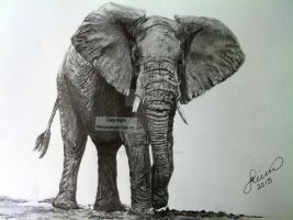 'Elephant Bull' - 2013 - (Drawing) by Stevegillettart