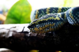 Desaturate Snake by Dramier