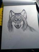 Wolf On Bristol paper - Head shot by Art-Is-My-Life-13