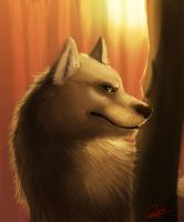 Wolf in Fall by WolfSplicer