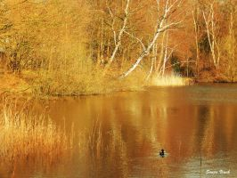 At the golden pond by Lentekriebel