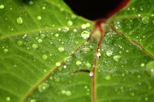 Waterdrops on a leaf by Mithcair