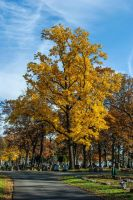 Fall Cemetery V by redwolf518