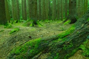 Tollymore Forest II by jvrichardson