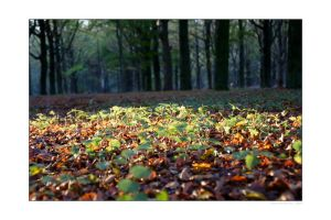 Forest Floor by pjcvdpol