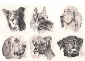 Dog breeds by Smile4daBirdy