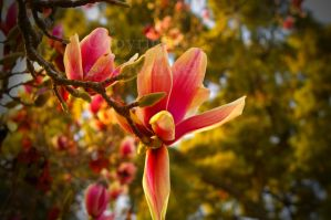First Flower of Spring by the-shutterbug