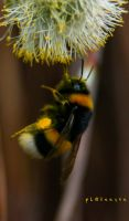 bee by pLateauce