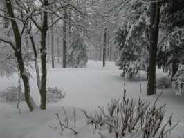 Snow in the front yard by RowyeStock