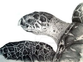 seaturtle drawing by dovespirit