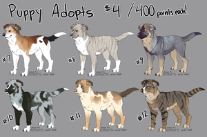 Puppy Adopts - Set 2 ALL SOLD by kleeblatts