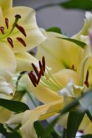 Malvern Show May 2014 4 6 by melrissbrook