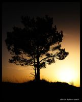 Lonely Tree by hquer