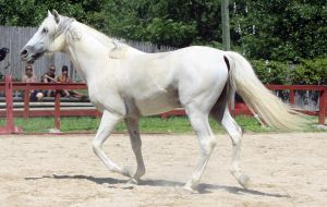 Andalusian 13 by roar-shack-stock