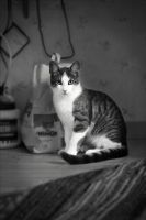 Fritz in black and white by bengti2