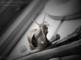 Look at that rearing snail by SallokcaB
