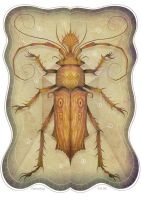 Entomology Tab. III by V-L-A-D-I-M-I-R