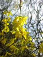 Yellow Flowers 1 by ArcadianSpaceship
