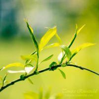 Spring arrives by TammyPhotography