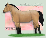 Apparoama Filly Import-4 by pom-happy-my-dog
