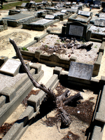 South Guildford Cemetery 13 by cheese-stick