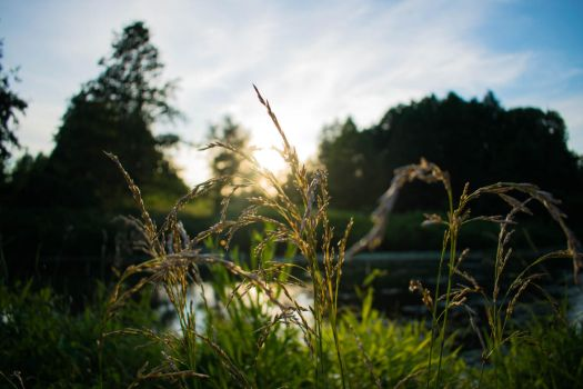 Grass in the sun by Arelias17