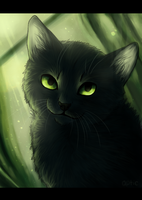 Emerald Mists by lucity