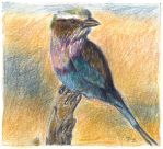Lilac-breasted Roller by JoJo83