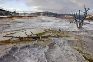 Mammoth Hot Springs at Dusk by papatheo