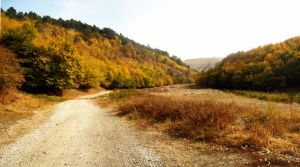 Autum's road by webster14