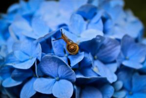 Hydrangea and Snail by HighPassPhotography