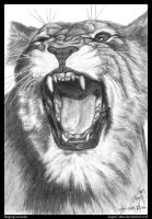 Drawing Practice #12 ~ Raging Lioness by nagini-chan