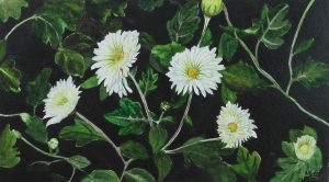 White Chrysanthemums by aakritiarts