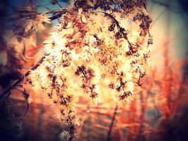 Baby's Breath. by leannlaughlove