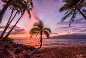 Burning Palm by AndrewShoemaker