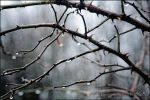 Thorns by AStoKo by AStoKo