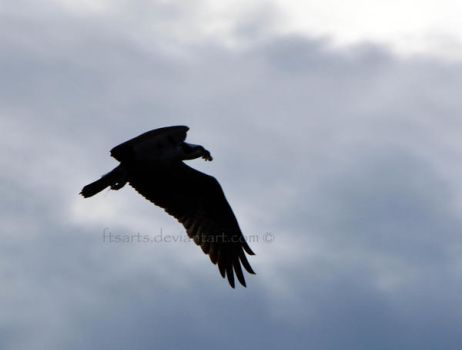 Osprey Silhouette (with dinner in tow) by FTSArts