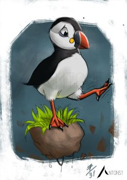 Dcembird: 7/31 endangered Puffin Sketch by Anton51