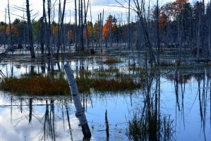 Upstate New York Wetlands by recycledrelatives