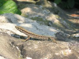 Lizard by ShortcutToHell